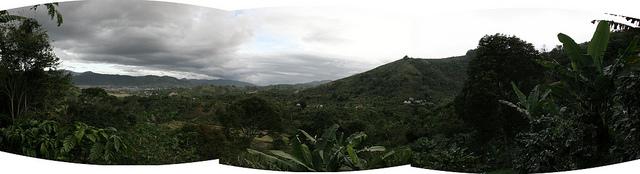 Hoe koffie de wereld over is gereisd en naar Indonesië kwam