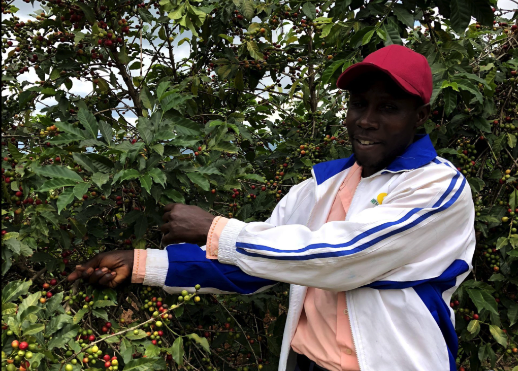 Pure Africa verstrekt microkredieten in Afrika
